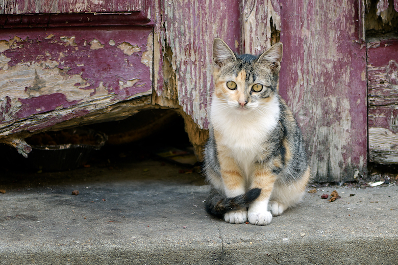 help feral cats