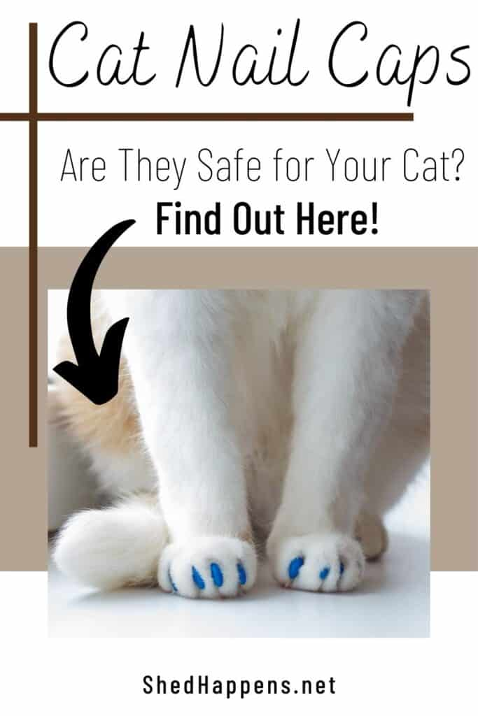 feet of an orange and white cat, sitting on a white surface, wearing blue nail caps with the text asking are nail caps safe for cats?