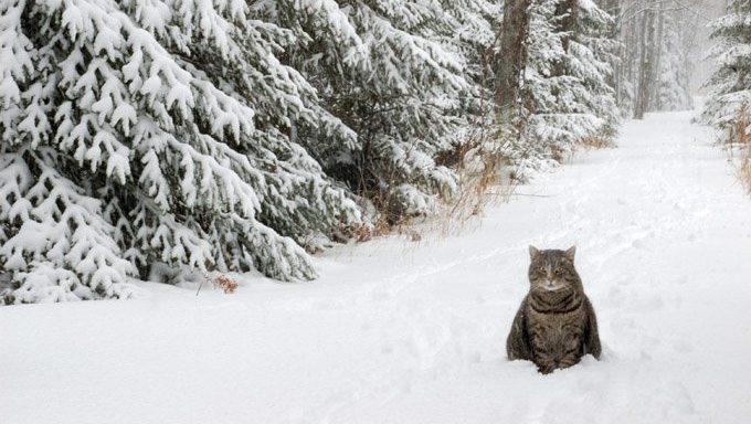 cat in snow
