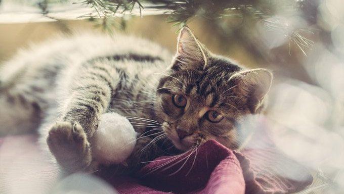 cat on blanket in winter
