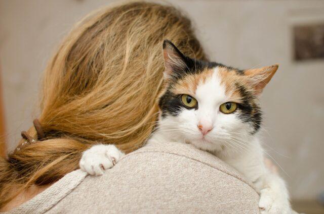 take cat temperature