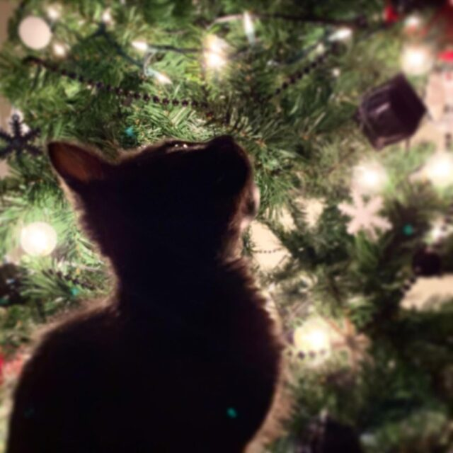 christmas tree cat safety