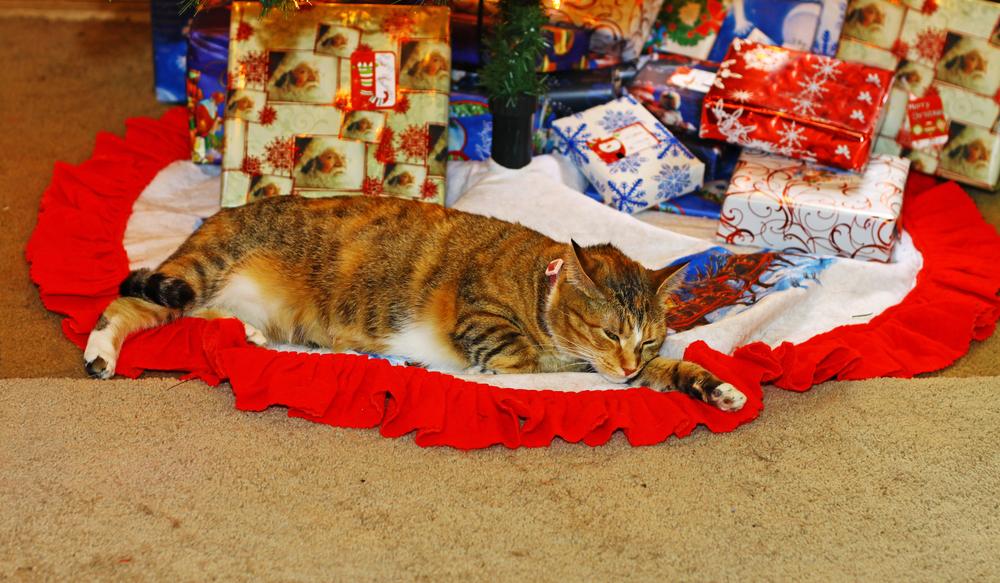 Christmas Comfy