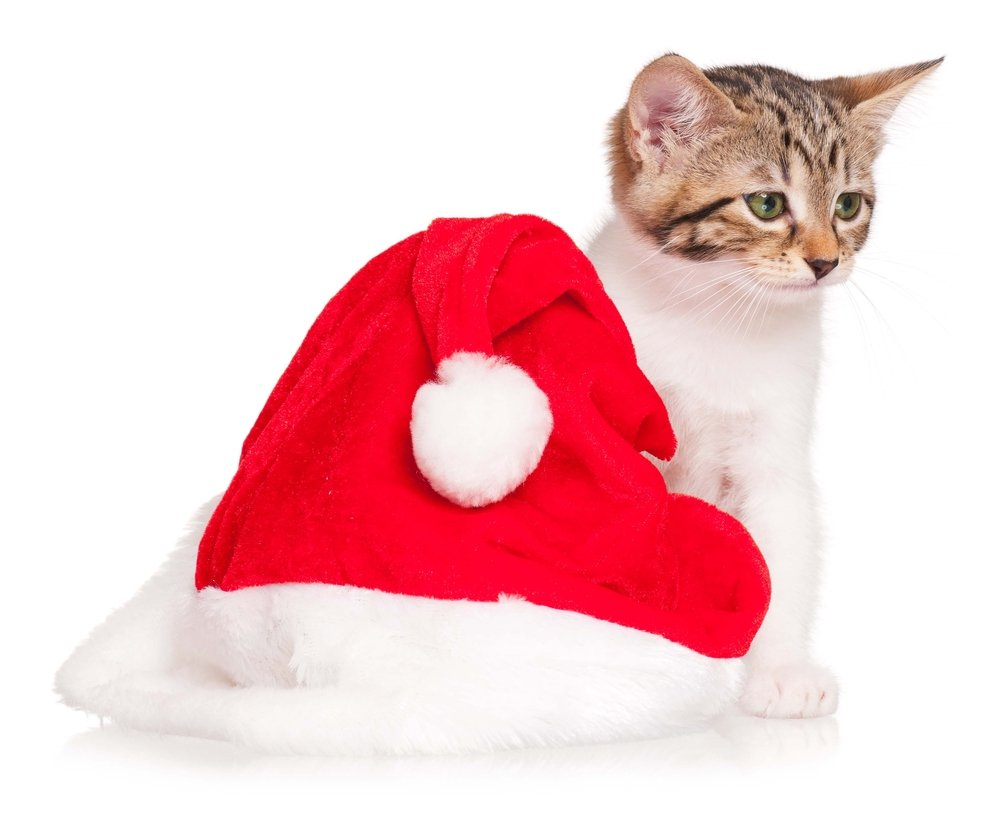 Here's Santa's Hat, But Where's The Rest Of Him?
