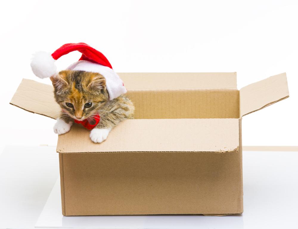 Hope Santa Brings More Boxes
