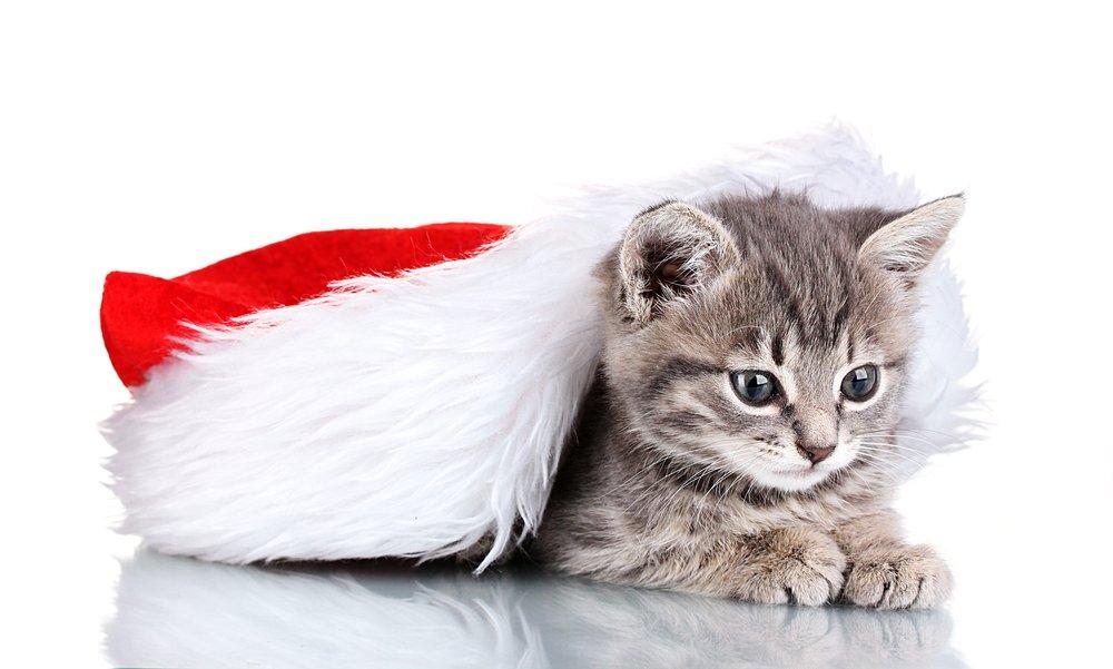 Hiding Out To Surprise Santa