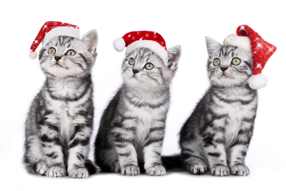 We Three Kittens Want Presents!