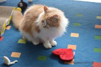 """Gracie is yet to give her opinion and will be conducting further """"catvestigation"""" :-)"""