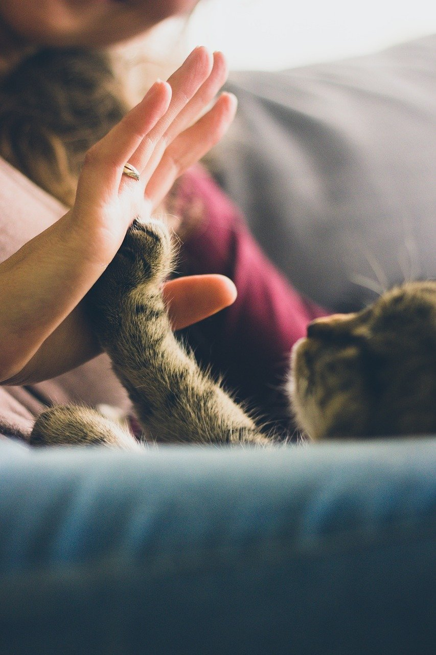 cat high fiving human