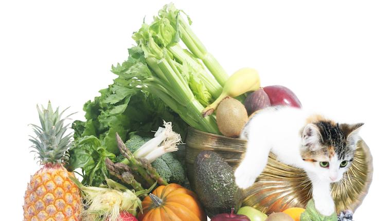 Kitten and vegetables