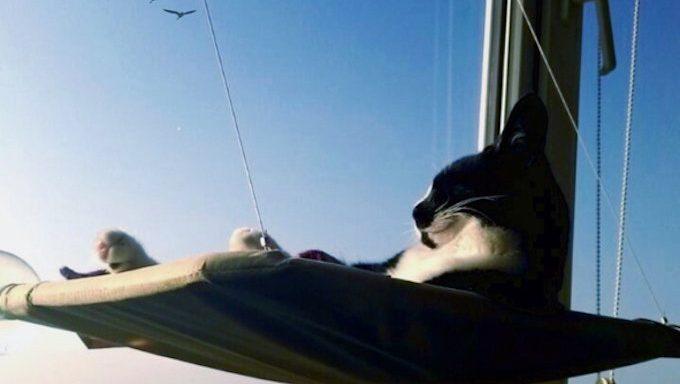 cat lounging in hammock