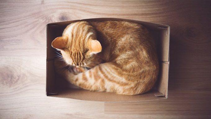 cat lying in a box
