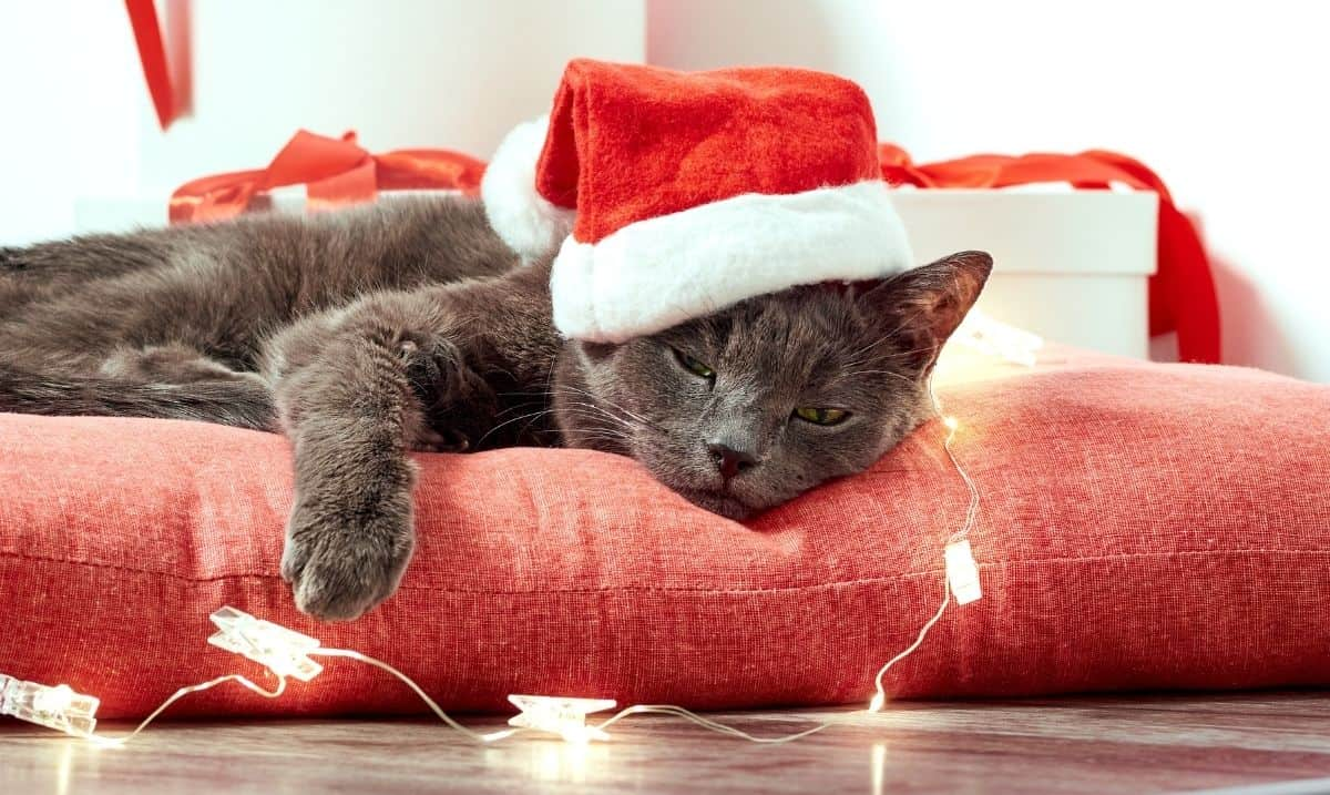 dark grey cat laying on a red pillow, surrounded by white decorative lights and wearing a Santa hat