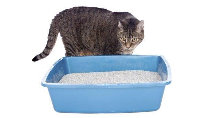 cat at litter box
