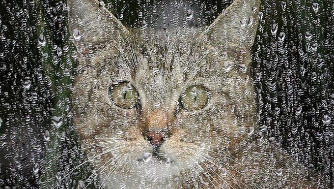 cat behind window in winter storm