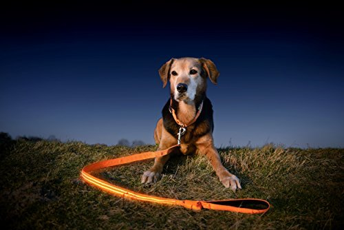 dog wearing Illumiseen LED leash