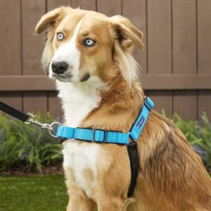 PetSafe Deluxe Easy Walk no-pull harness for walk your dog month