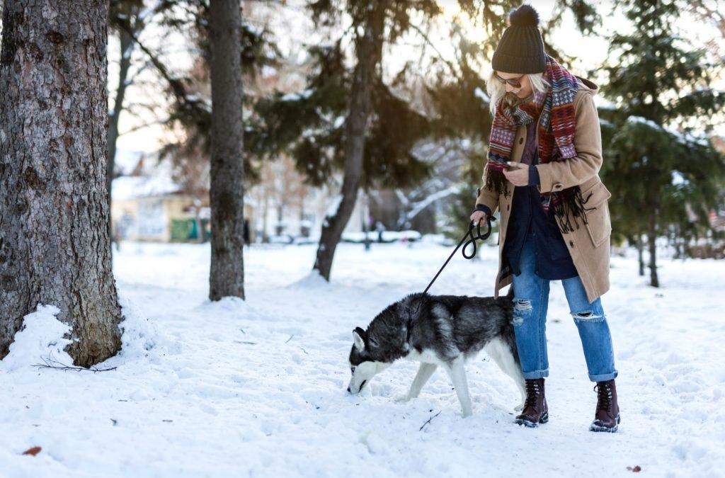 Getty woman walking husky