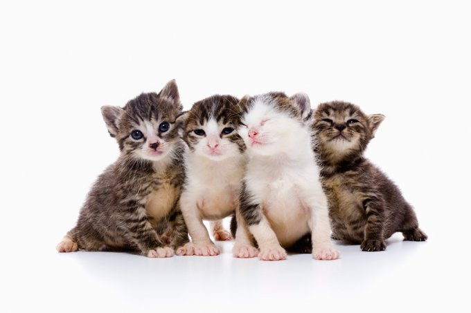 A group of kittens is called a kindle; a group of adult cats is called a clowder.