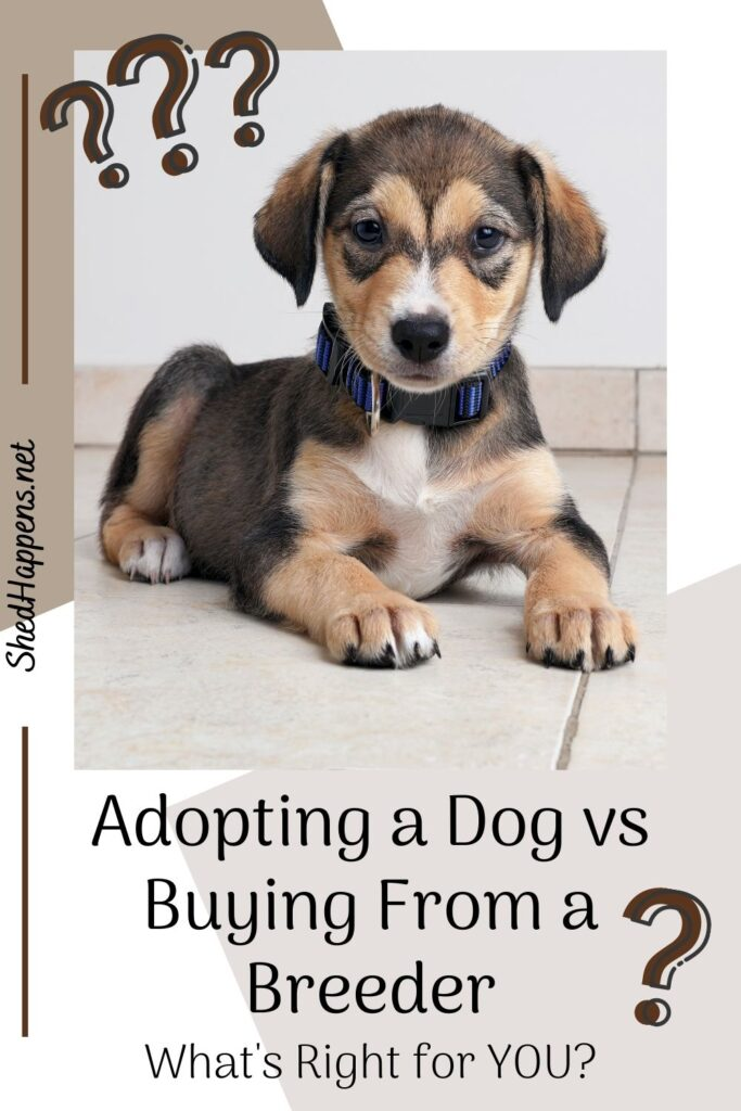 A small black, tan and white puppy with floppy ears laying on a cream coloured tile floor in front of a plain white wall with text asking: adopting a dog vs buying from a breeder, what's right for you?