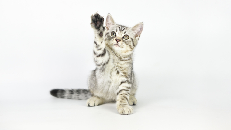 Your Cat's Paws Are Color Coordinated