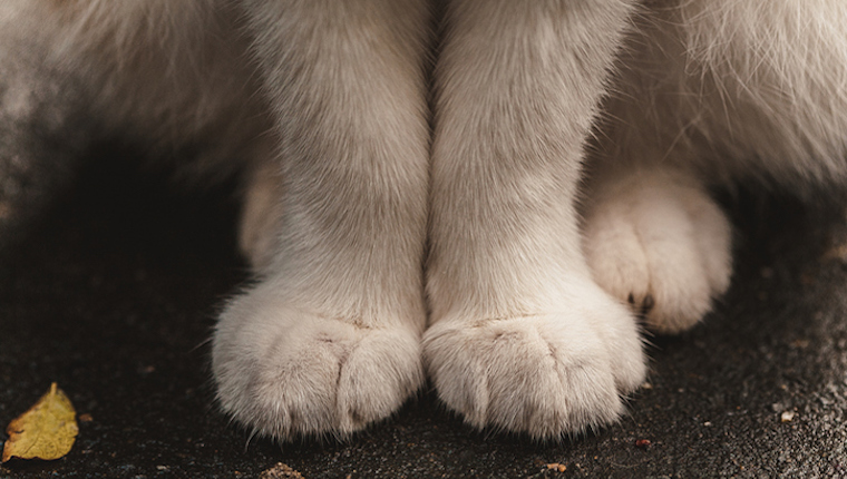 Your Cat's Paws Don't Have Equal Digits