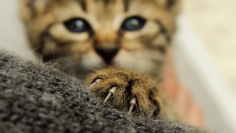 Your Cats Paws Act Like Protective Sheaths