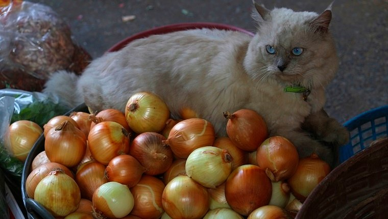 Cat with onions