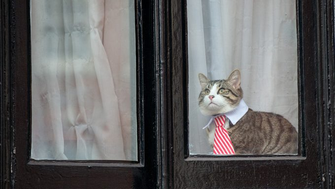 cat in tie looking out of window