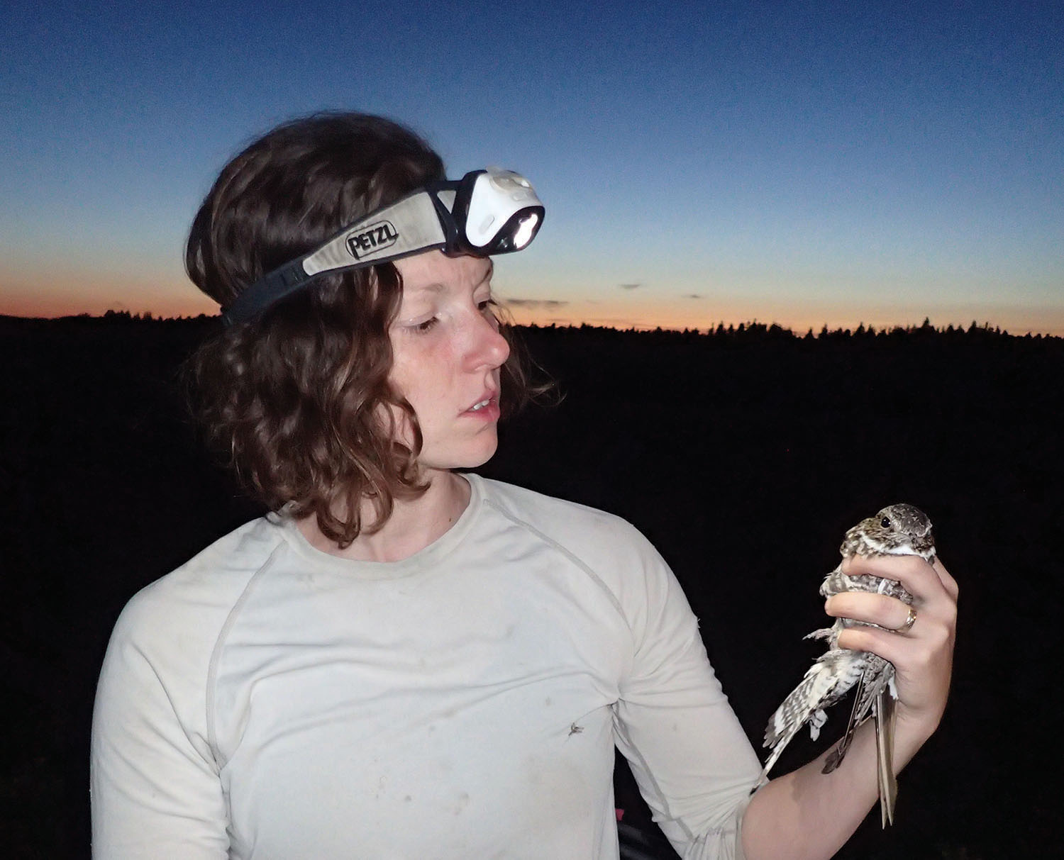 Elly Knight of the University of Alberta (top) holds a Common Nighthawk for a migration research project. Photo by Jonathan DeMoor
