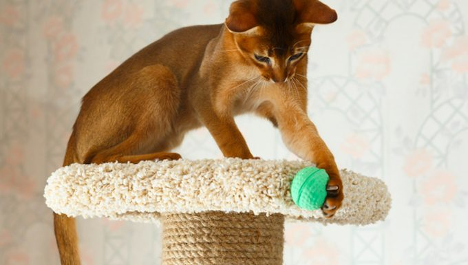cat with ball on cat tree
