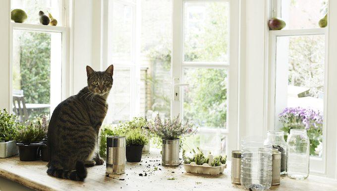 Avoid Poisonous Plants