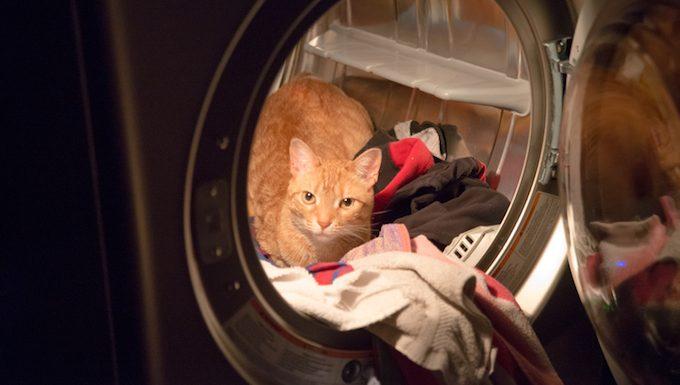 Don't Lock Your Cat Inside Appliances!