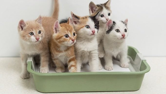 kittens sit in a green litter box