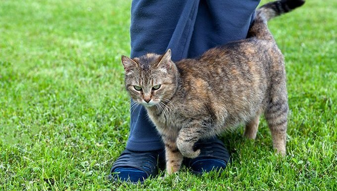 cat brushing against leg