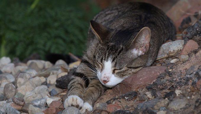 cat lying on rocks
