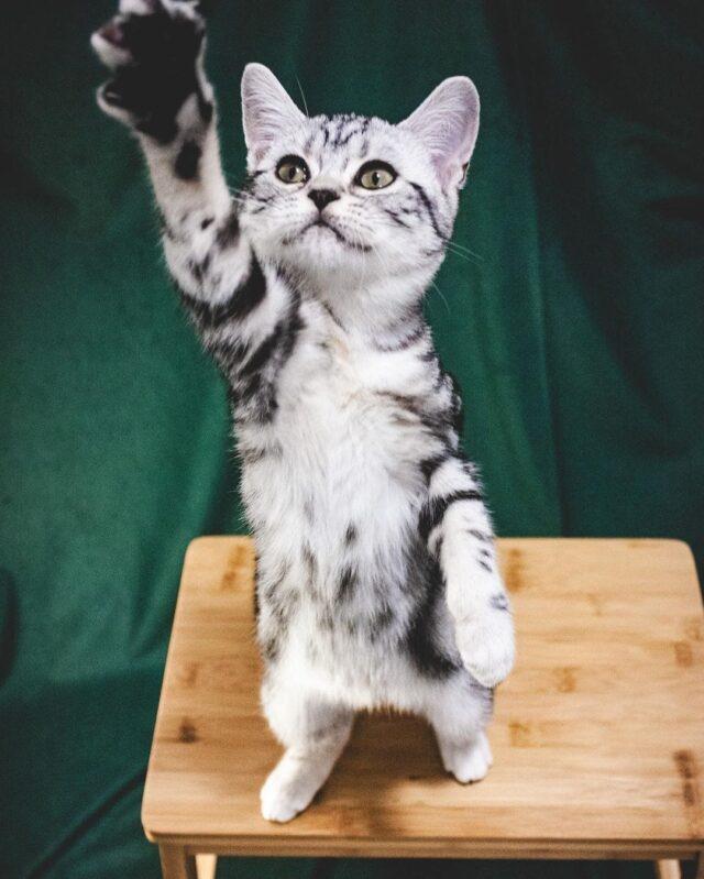 clicker training kittens