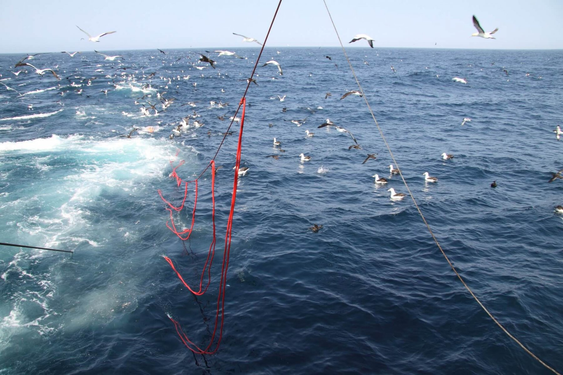 Bird-scaring lines in action in a Namibian longline fishery © John Paterson