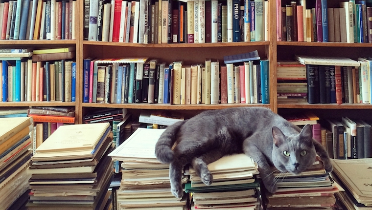 cat in library with books