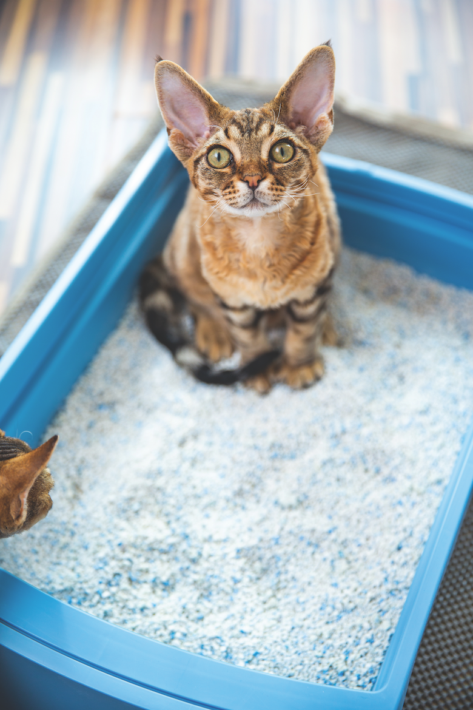 choosing a cat litter system