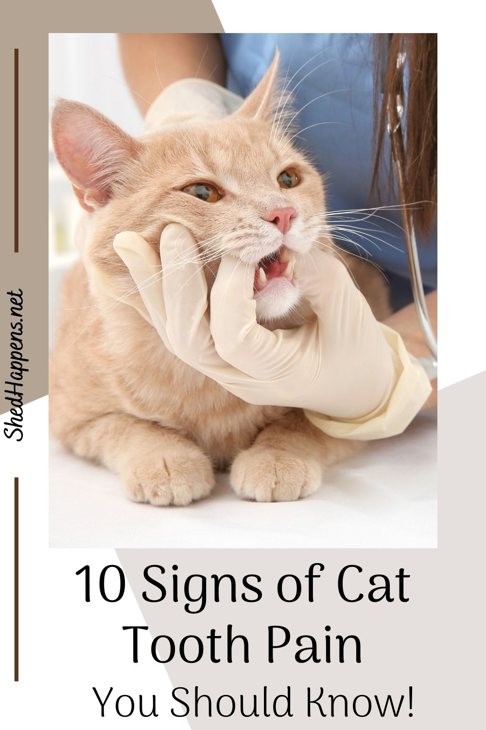An orange tabby cat is laying on an examination table, a veterinarian wearing blue scrubs is leaning over it, holding its mouth open with a gloved hand. Text states 10 signs of cat tooth pain you should know!