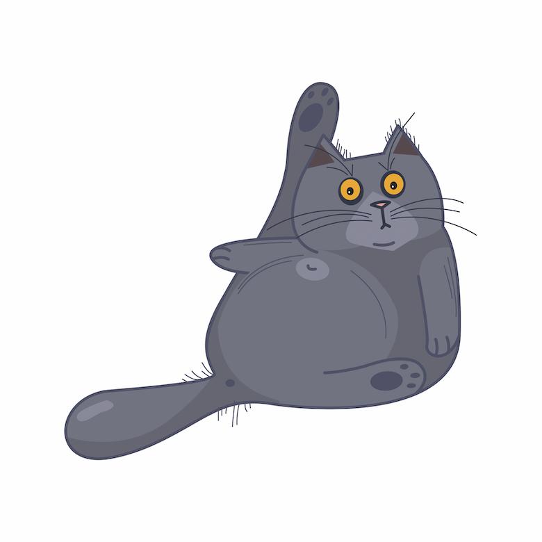 Cat Exercise lazy cat