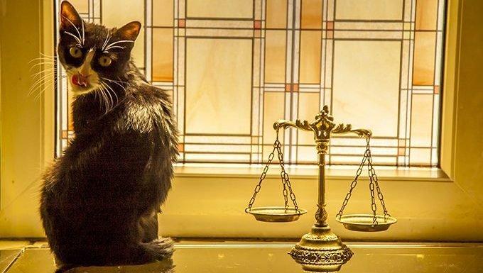 Libra Cat (September 23 - October 22)
