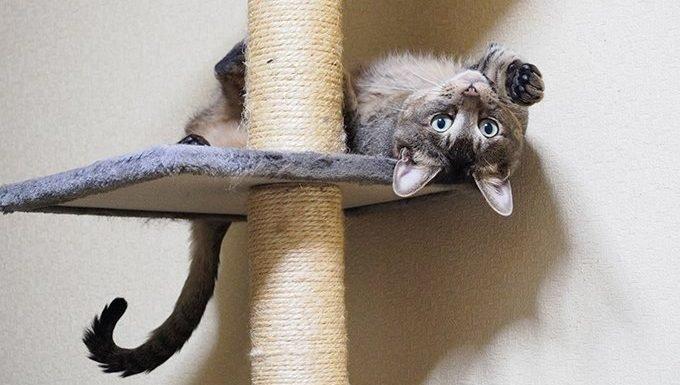 Aries Cat (March 21 - April 20)