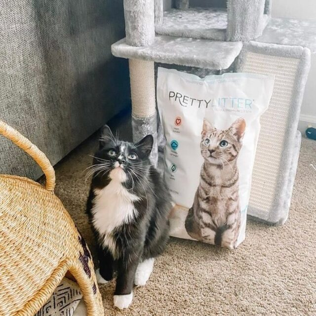 PrettyLitter by cat tree