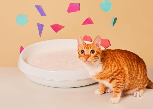 Colorful cat litter box