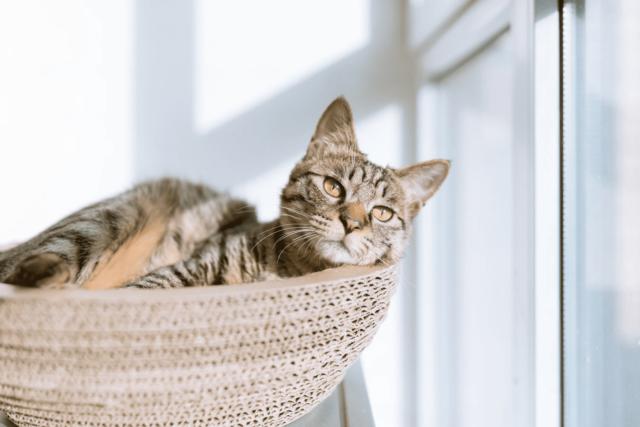 Cat resting by window