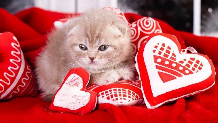 Little kitten sleeping on the red heart-shaped pillow