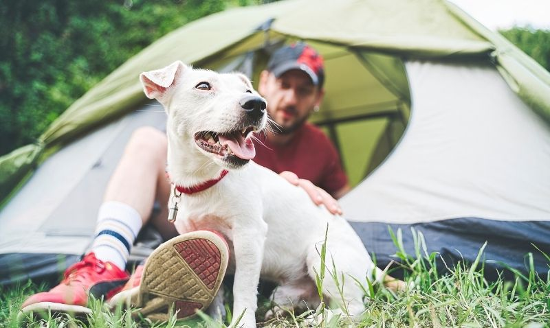 A small dog with short white hair, wearing a red collar is sitting in front of a grey and green tent outdoors in the grass. A man wearing a black baseball cap, red t-shirt, shorts, white socks and red sneakers is sitting in the open door of the tent with his legs extending out beside the dog.