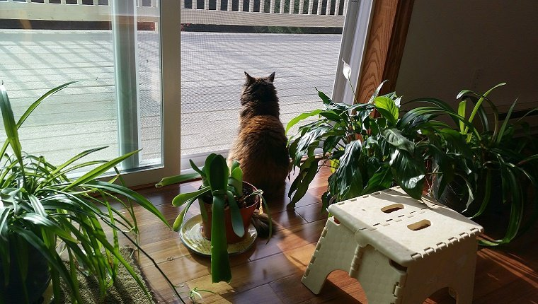 Houseplants And Flowers